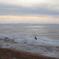 на берегу финского залива (а я тебя вижу, куда ты спряталась?) :: Sabina