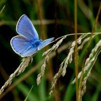 опять про бабочек 15 :: Александр Прокудин