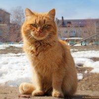 Что, фотограф, тоже разомлел на солнышке? :-) :: Андрей Заломленков