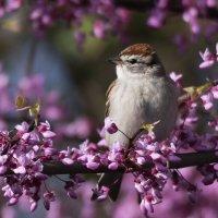 Все цветет, вокруг весна :: Tatiana