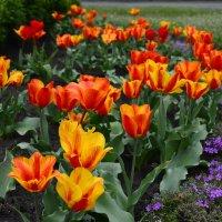 Весна, однако... :: Тамара Бедай