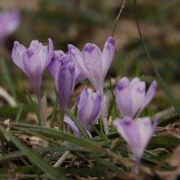 Весна :: Светлана