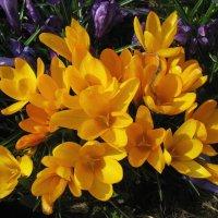 Солнечный букет в саду :: sm-lydmila Смородинская
