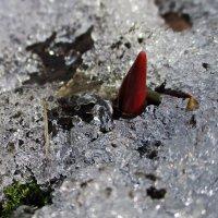 Топлёный лёд :: AleksSPb Лесниченко
