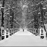 Зимняя аллея :: Меднов Влад Меднов