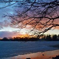 Вечер на озере...... :: Юрий Цыплятников