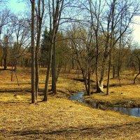 Весна в Баболовском парке ЦС - 4 :: Сергей