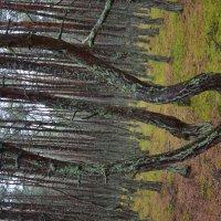 танцующий лес :: Константин Трапезников
