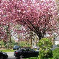 Брюссель в цвету.... :: Elena Ророva