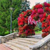Праздник хризантем на Спивочем поле. Киев :: Татьяна Ларионова