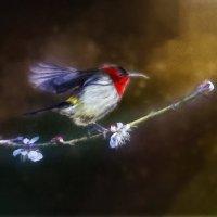 Птичка :: Лара Leila