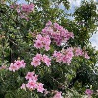 Дерево цветет :: Александр Деревяшкин