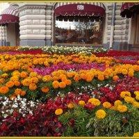 А Москва все хорошеет,расцветает, как заря! :: Нина Андронова