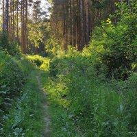 Тропинка в лесу :: Фотогруппа Весна-Вера,Саша,Натан