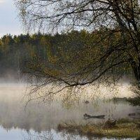 Весенним утром....... :: Юрий Цыплятников
