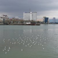 Вид с набережной :: Ольга
