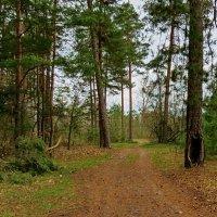 На лесных тропинках! :: Liliya Kharlamova