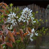 Весенние цвета :: Heinz Thorns