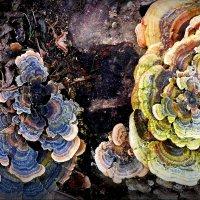 Вот такие грибы... :: Владимир Шошин