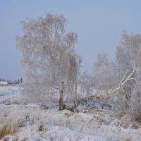 Зимы прекрасный день. :: сергей
