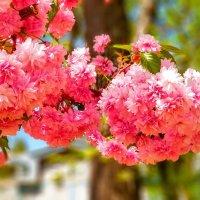 Весна в цветах :: Вячеслав Случившийся