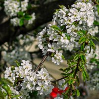 Весна! :: Юрий ЛМ