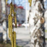 И к нам пришла весна. :: сергей
