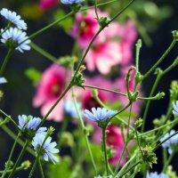 Если в твоей душе осталась хоть  одна цветущая ветвь, на нее всегда сядет поющая птица. .. :: Гала