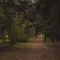Прогулка в лесу. :: Сергей Фомичев