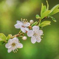 Весна ... :: Юрий Гординский