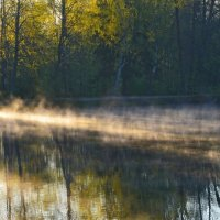 На утреннем пруду...... :: Юрий Цыплятников
