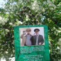 Примета: цветет черемуха - к похолоданию...(В отношениях между  людьми и державами?) :: Alex Aro Aro Алексей Арошенко