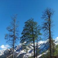 Весна в горах :: Татьяна Тюменка