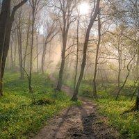 Туманный лес на Стрижаменте :: Фёдор. Лашков