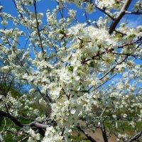 Самарская весна :: Надежда