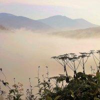 Сухие зонтики в тумане :: Сергей Чиняев