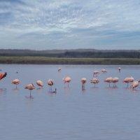 Перу. Такна. Водно-болотные угодья Итэ. :: Svetlana Galvez