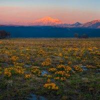 Цветение альпийских лугов на Кавказе :: Фёдор. Лашков