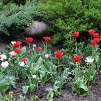Цветущий май под мирным небом! :: Надежд@ Шавенкова