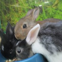 Кролики. :: Зинаида