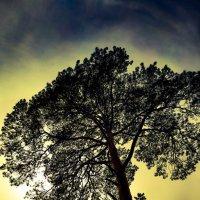 Дерево :: Елена Елена