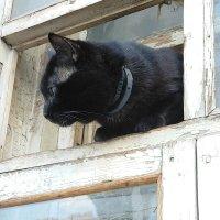 Любопытная кошечка :: Yulia Raspopova