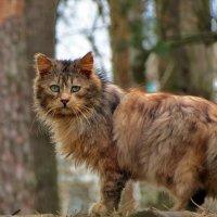 Про кота :: Liliya Kharlamova