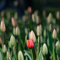 Весна наступает :: Юра Викулин