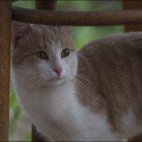 Соседский кот :: Александр Тарноградский