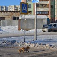 Переходите улицу,правильно,только по зебре... :: Георгиевич