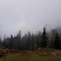 Дорога вдоль тумана :: Наталья (D.Nat@lia)