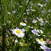 Есть особая прелесть в цветах полевых...... :: Galina Dzubina