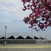 Самарский стадион весной :: Надежда