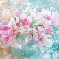 яблони в цвету. :: Майкл Медведев